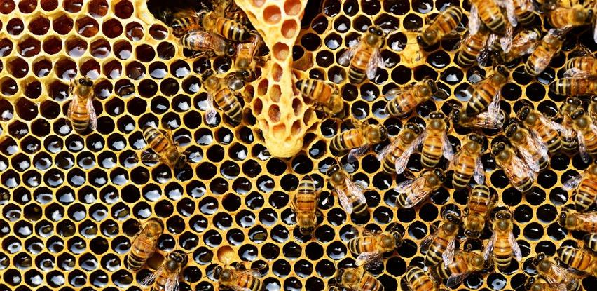 Umjesto prinosa meda, bh. pčelari zbrajaju samo štete ove godine