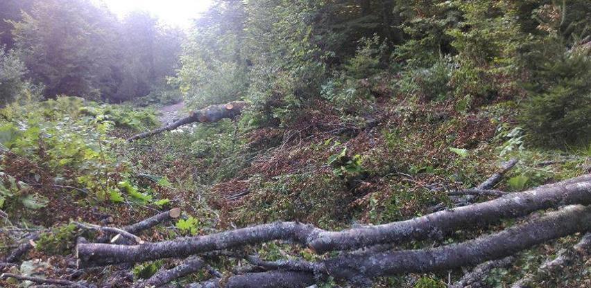 Sječa drveća na ušću Rakitnice, iz Sarajevo-šuma tvrde da je po zakonu