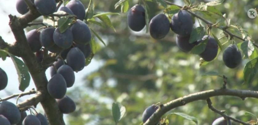 U Tuzli predstavljen novi poziv za dodjelu grantova poljoprivrednicima