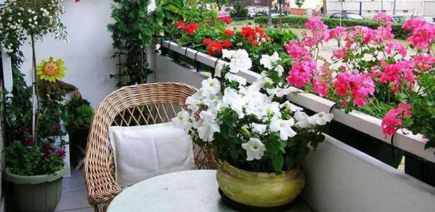 Radionica iz oblasti hortikulturnog uređenja balkona, dvorišta i ulaza