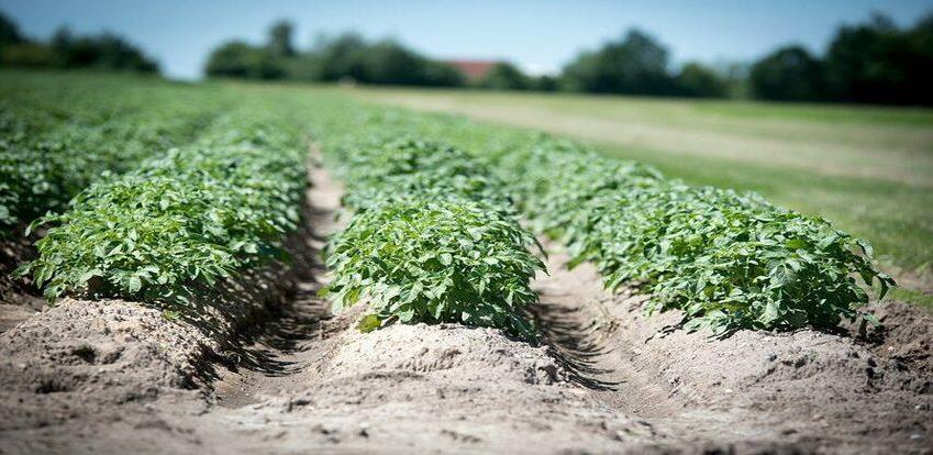 Pravilnik novčanih podsticaja za kapitalne investicije u poljo. proizvodnji