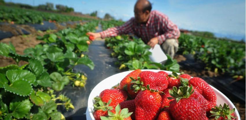 """Prihvaćen """"Zeleni izvještaj"""" o stanju poljoprivrede u 2017. godini"""