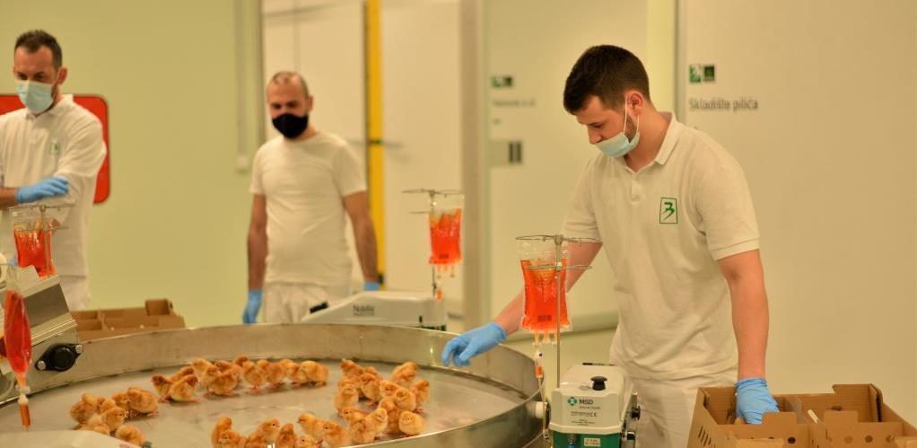 Nova dimenzija peradarstva: Bingo otvorio najsavremeniji repro centar za uzgoj pilića