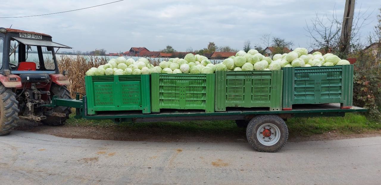 Ove zime u Bosni i Hercegovini neće faliti domaćeg kiselog kupusa
