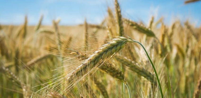 Zadruge su najbolji vid organizacije poljoprivrednika
