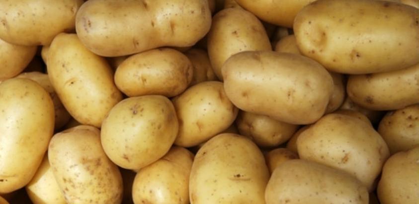 Program posebnog nadzora karantinskih štetnih organizama na krompiru u RS u 2021. godini