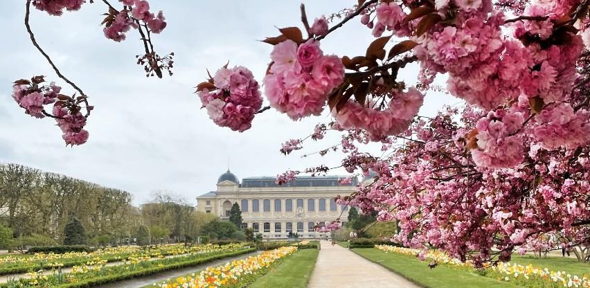 Proljeće u Parizu: Fotografije zbog kojih ćete se ponovno zaljubiti u najromantičniji grad