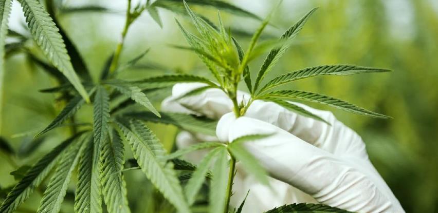Kanabis uklonjen s liste najopasnih droga