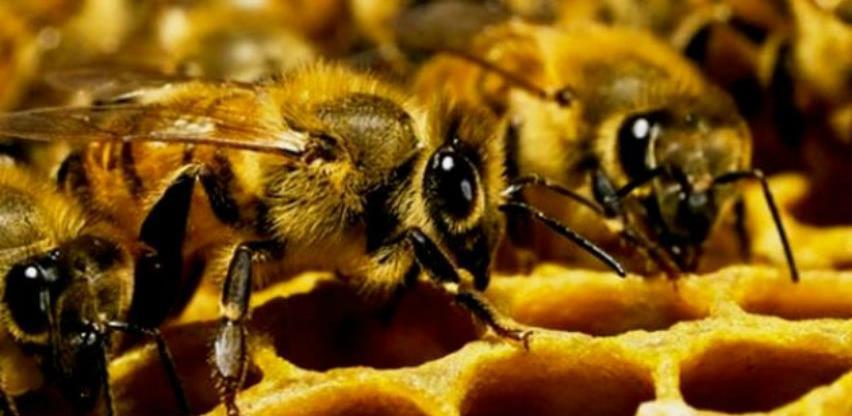 Opština Višegrad obezbijedila 6 tona šećera za prihranu pčelinjih društava