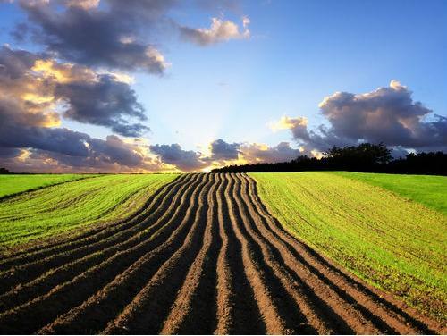 U funkciju staviti nekorišteno poljoprivredno zemljište
