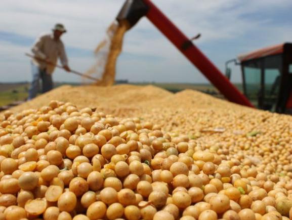 Izuzetan potencijal za proizvodnju organske soje