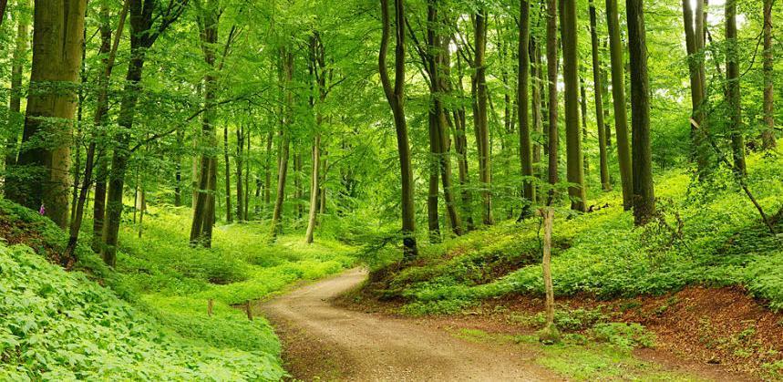 Pravilnik o izmjenama Pravilnika o kriterijumima za raspodjelu sredstava posebnih namjena za šume