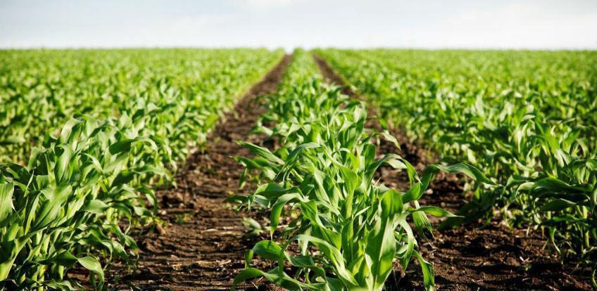 Pravilnik o kriterijima i postupku za ostvarivanje prava na poticaj u poljoprivrednoj proizvodnji