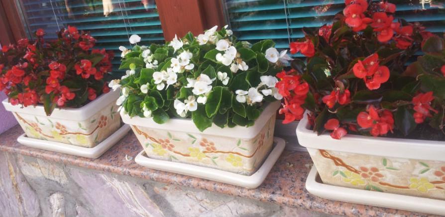 Objavljen javni poziv za izbor hortikulturno najuređenijeg balkona i dvorišta