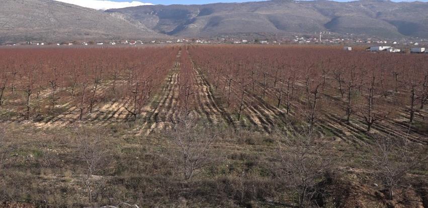 Jaffa Komerc: Voće s plantaža Hercegovine na trpeze širom Rusije i Evropske unije