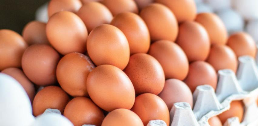 Izvoz jaja u EU početkom sljedeće godine