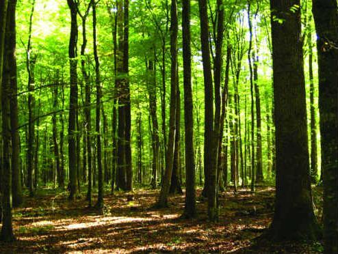 Bihać u projektu korištenja šumske biomase za proizvodnju energije