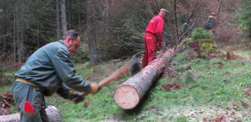 Marić: Neće biti smanjenja plata u Šumama