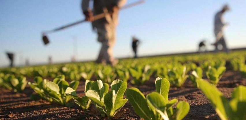 Vlada će sufinancirati poljoprivrednu proizvodnju u HBŽ-u