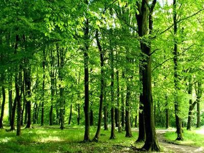 Neupitna potreba donošenja zakona o šumama FBiH