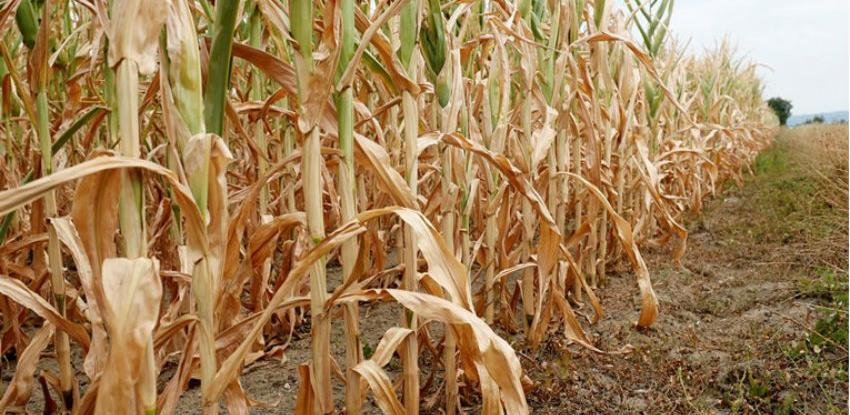 Europska komisija povećava potporu poljoprivrednicima koji se bore sa sušom