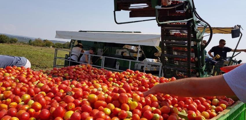Iz Hercegovine je već izvezeno 70 tona rajčice, očekuje se urod od 2000 t