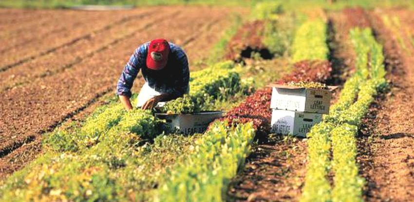 Kroz USAID/Sweden FARMA II projekt otvoreno preko 300 radnih mjesta