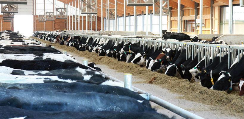 Milkosova farma Spreča nudi pomoć bh. stočarima u nevolji