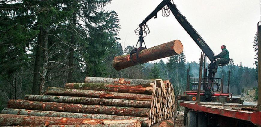 Potrebe drvoprerađivača dvostruko veće od ponude