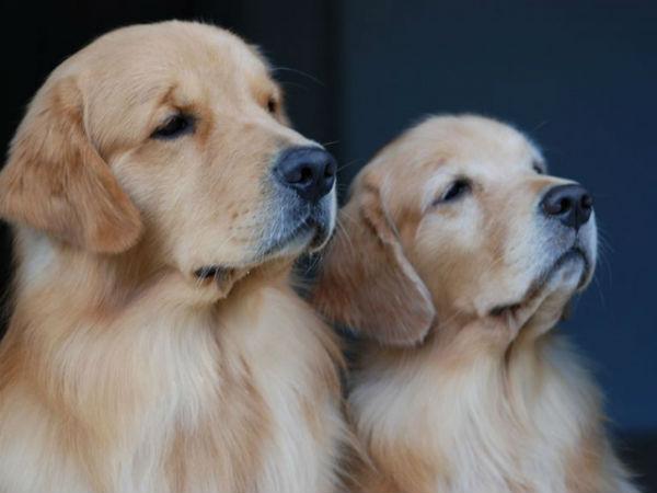 Hrvatska uvodi porez za pse?