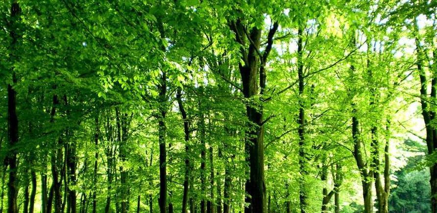 Izmjene i dopune Zakona o šumama RS uskladiti s Ustavom BiH (VIDEO)