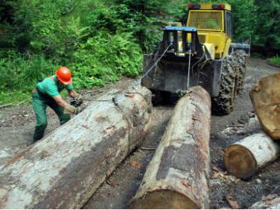 Vlada ZDK odobrila 211.108 KM za projekte iz oblasti šumarstva