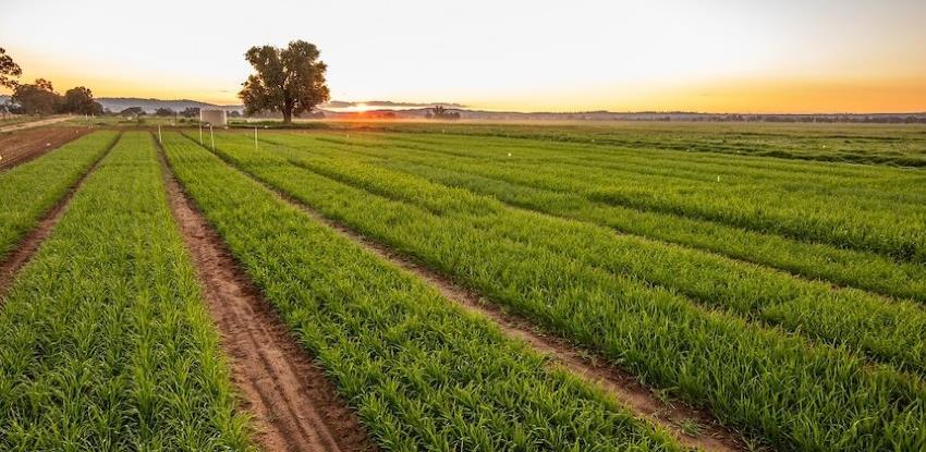 Na australijskoj farmi od 1.900 hektara sav posao rade roboti i pametni senzori