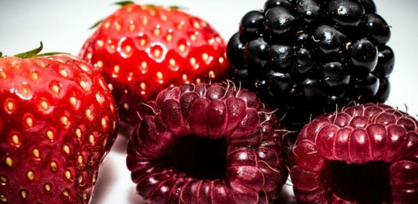 U Modriči idealni uslovi za uzgoj maline i jagode