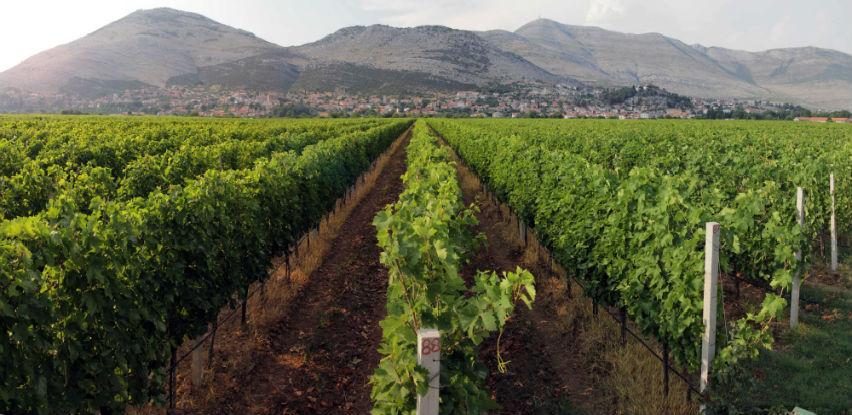 Hrvatska želi da zaštiti nazive vina koje i BiH koristi