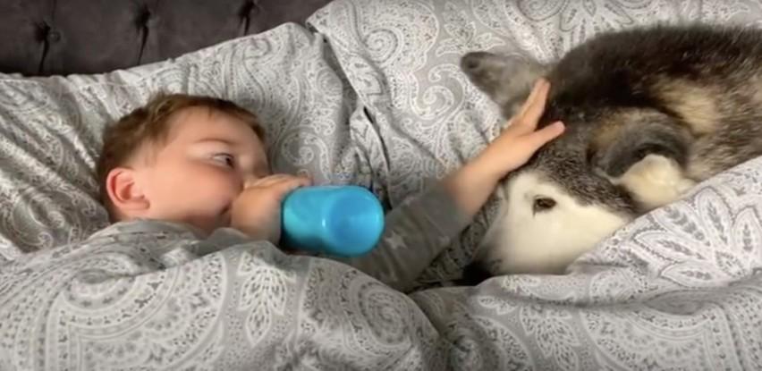 Dječak i njegov predivni haski ne odvajaju se ni kad je vrijeme za spavanje