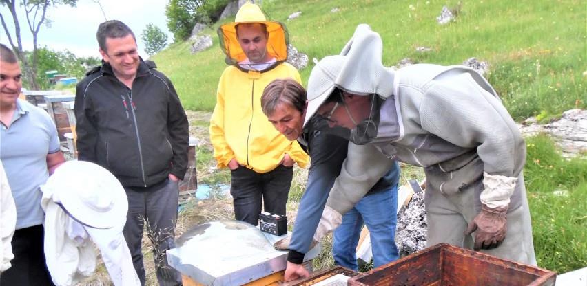 Bh. pčelari počinju sa proizvodnjom pčelinjeg otrova, cijena 40.000 KM po kg