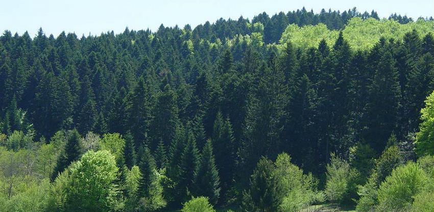 U Federaciji BiH državne šume na površini od 1,23 miliona hektara