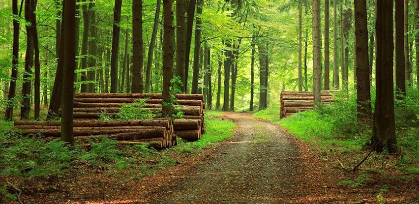 Rast proizvodnje i prodaje šumarskih sortimenata u RS-u