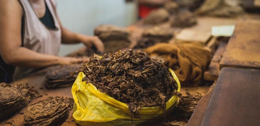 Zadruga iz Šamca do sada otkupila 35 tona duhana 'Virdžinija'