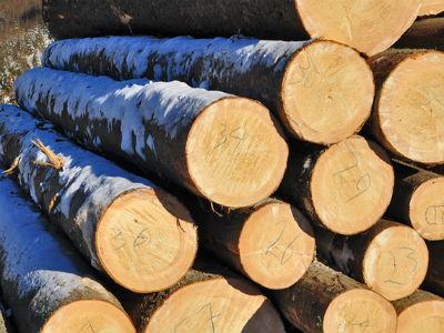 Domaćim kupcima prednost pri prodaji drvnih sortimenata