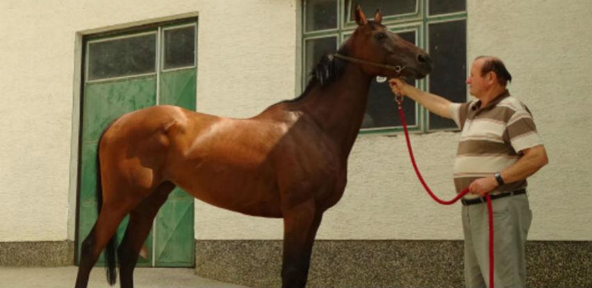 Idriz Bašić, čovjek u čijoj ergeli se rađaju šampioni trkaćih staza