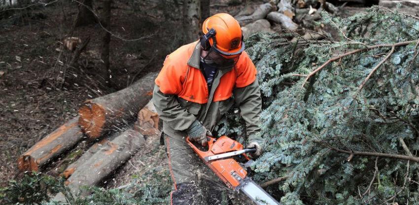 Plaće radnika i nepostojanje propisa temeljni problemi sektora šumarstva u BiH