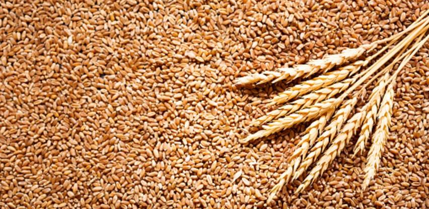 Poljoprivrednici pozvali vlasti da se pobrinu oko otkupa i otkupnih cijena žita