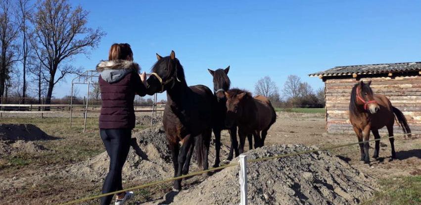 Pasmina je sačuvana: Povećava se brojno stanje bosanskog brdskog konja