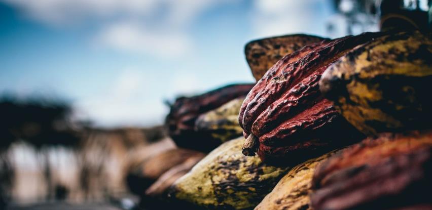 Kakao pospješuje rad mozga