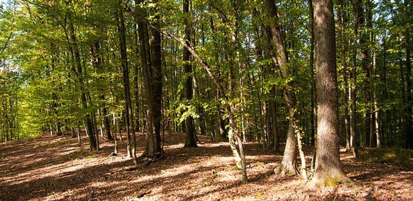 Banjalučki Šuma Plan kreće u popisivanje privatnih šuma u BPK