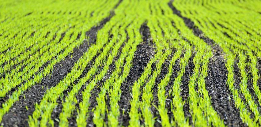 U toku izrada akcionog plana prvog klastera u poljoprivredi Republike Srpske