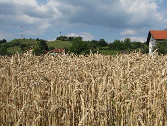 Revizija RS: Kršenje procedura kod odobravanja poticaja za poljoprivredu