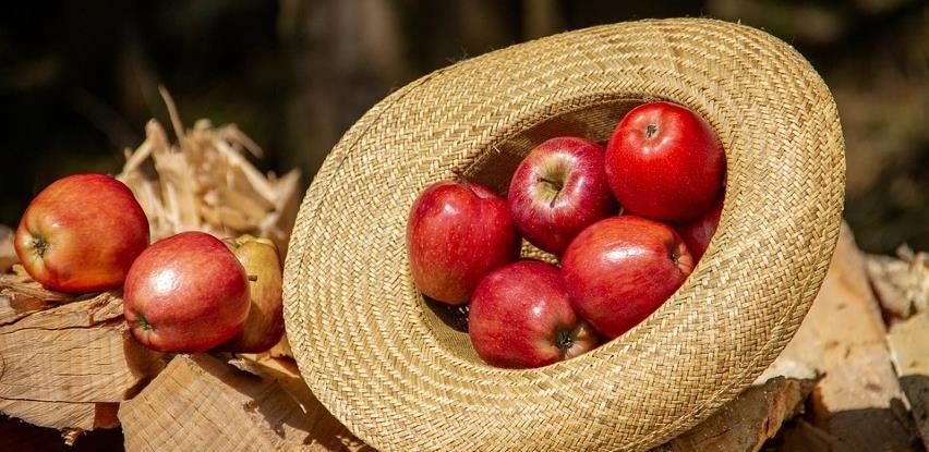 BiH u Rusiju izvezla 3,5 miliona kg jabuka i pola miliona sadnica